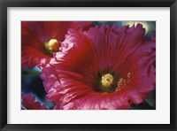 Framed Red Hollyhock