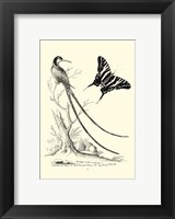 Framed B&W Long. Tailed Hummingbird (1742)