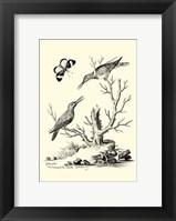 Framed B&W The Hummingbirds (1742)