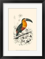 Framed Birds of Costa Rica I