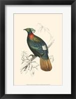 Framed Birds of Costa Rica II