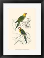 Framed Birds of Costa Rica IV