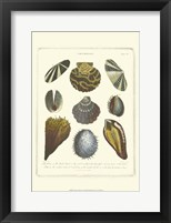 Framed Conchology Collection I