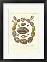 Framed Conchology Collection III