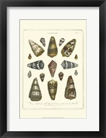 Framed Conchology Collection IV