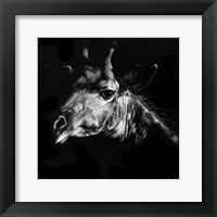 Framed Wildlife Scratchboards VI