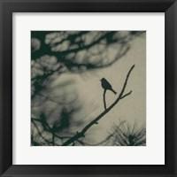 Framed Caligraphy Bird I