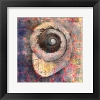 Framed Seashell-Snail