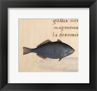 Framed Blue Fish
