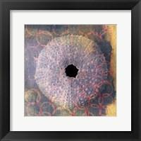 Framed Seashell-Urchin