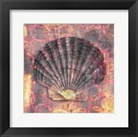 Framed Seashell-Scallop