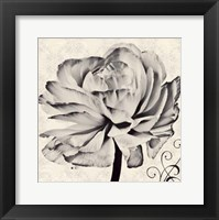 Framed Ghost Flower II