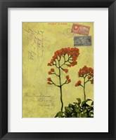 Framed Postage VII
