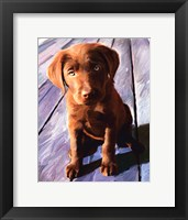 Framed Chocolate Lab Gus