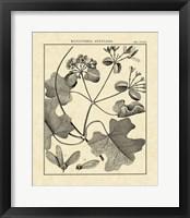 Framed Vintage Botanical Study II
