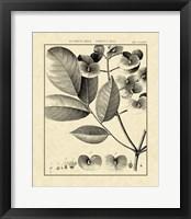 Framed Vintage Botanical Study V