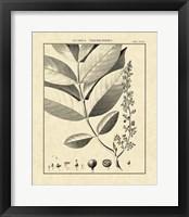 Framed Vintage Botanical Study VI