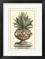 Framed Antique Munting Aloe IV