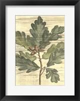 Framed Weathered Oak Leaves I