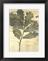 Framed Weathered Oak Leaves II