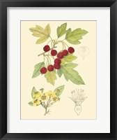 Framed Berries & Blossoms III