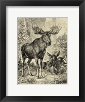 Framed Vintage Moose or Elk