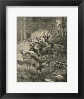 Framed Vintage Roe Deer I