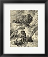 Framed Vintage Common Brown Bear