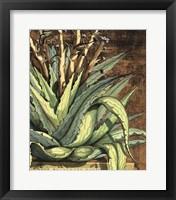 Framed Graphic Aloe I