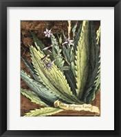 Framed Graphic Aloe II