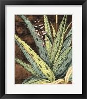Framed Graphic Aloe IV