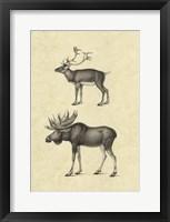 Framed Vintage Elk