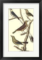 Framed Bird Family I