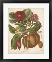 Framed Botanicals I