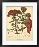 Framed Botanicals II