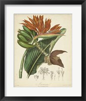 Framed Botanicals III