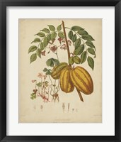 Framed Botanicals V