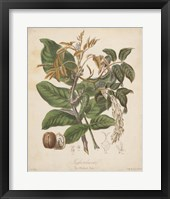 Framed Botanicals VI
