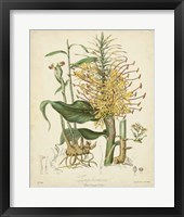 Framed Botanicals VII