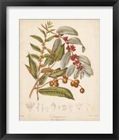 Framed Botanicals VIII