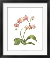 Framed Orchid Study IV