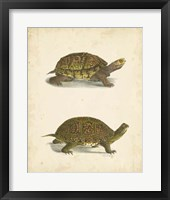 Framed Turtle Duo III