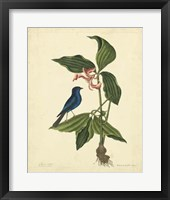 Framed Bird & Botanical IV