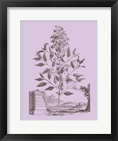 Framed Romantic Jasmine