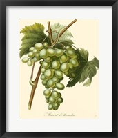 Framed Grapes I