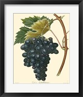 Framed Grapes II
