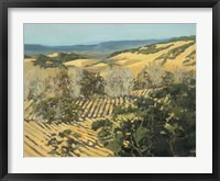 Winter Vineyard Framed Print