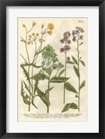 Framed Weinmann's Garden VI