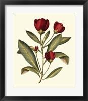 Framed Jenna's Flowers IV