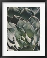 Framed Agave I